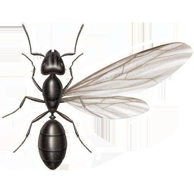 A1 Exterminators Ant Swarmer Pest Control