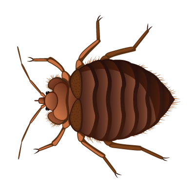 Bed Bug A1 Exterminators