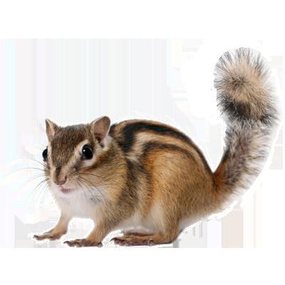 Chipmunk Control A1 Exterminators