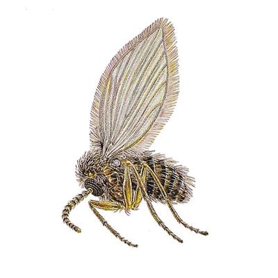 A1 Exterminators Drain Fly Pest Control