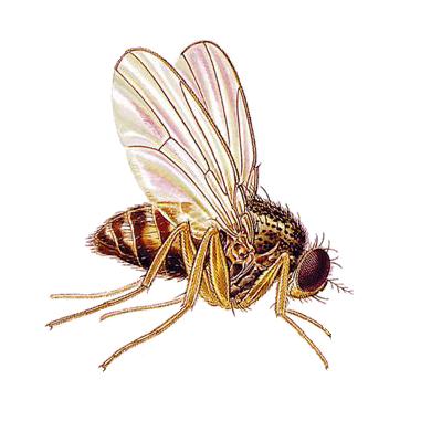 A1 Exterminators Fly Pest Control