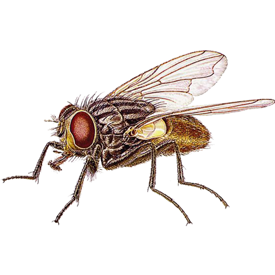 A1 Exterminators House Fly Pest Control