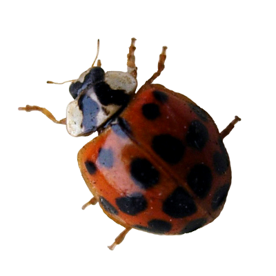 A1 Exterminators Lady Bug Pest Control