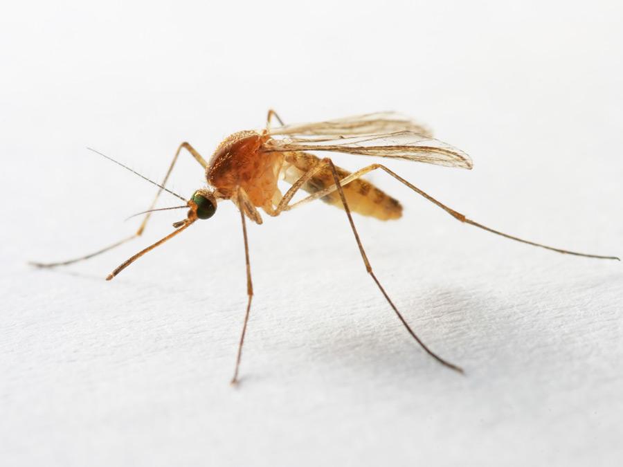 mosquito A1 Exterminators