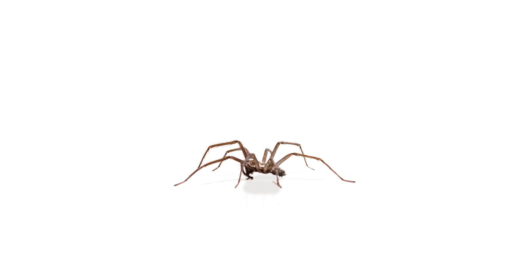 A1 Exterminators Spider Layer Pest Control