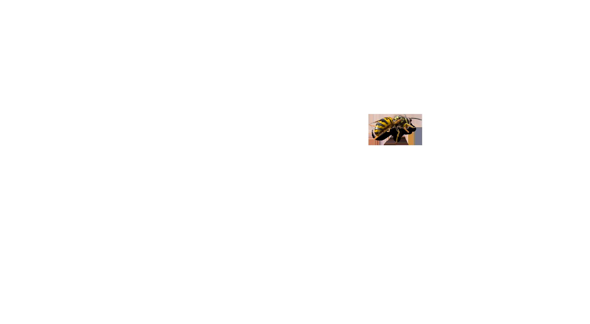 A1 Exterminators Wasp Pest Control 3