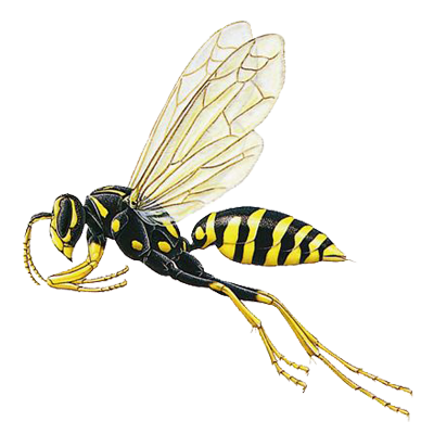wasp A1 Exterminations