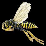 A1 Exterminators Paper Wasp Pest Control