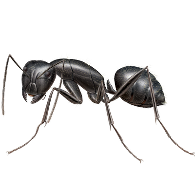 A1 Exterminators Carpenter Ant Pest Control