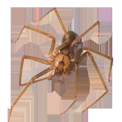 A1 Exterminators Spider Pest Control