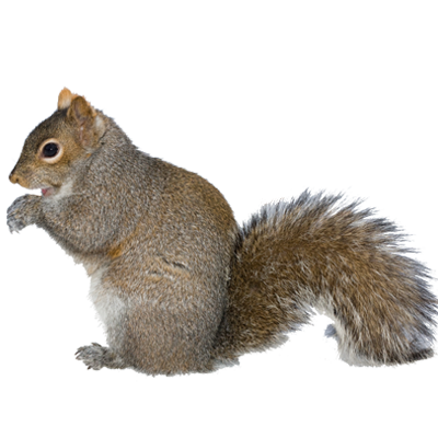 A1 Exterminators Squirrels Wildlife Control