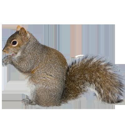 Squirrel Control A1 Exterminators