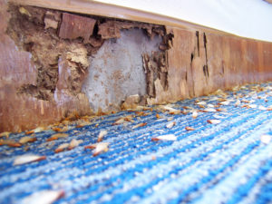 Termite Damage A1 Exterminators