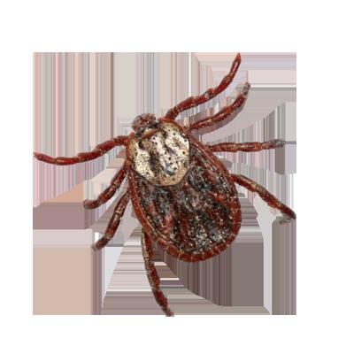 A1 Exterminators Tick Control