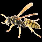 A1 Exterminators Yellow Jacket Hornet Pest Control