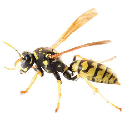 A1 Exterminators Yellow Jacket Hornet Pest Control