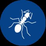 Ant Control A1 Exterminators