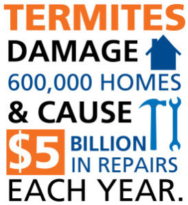 A1 Exterminators Termite Damage Infographic