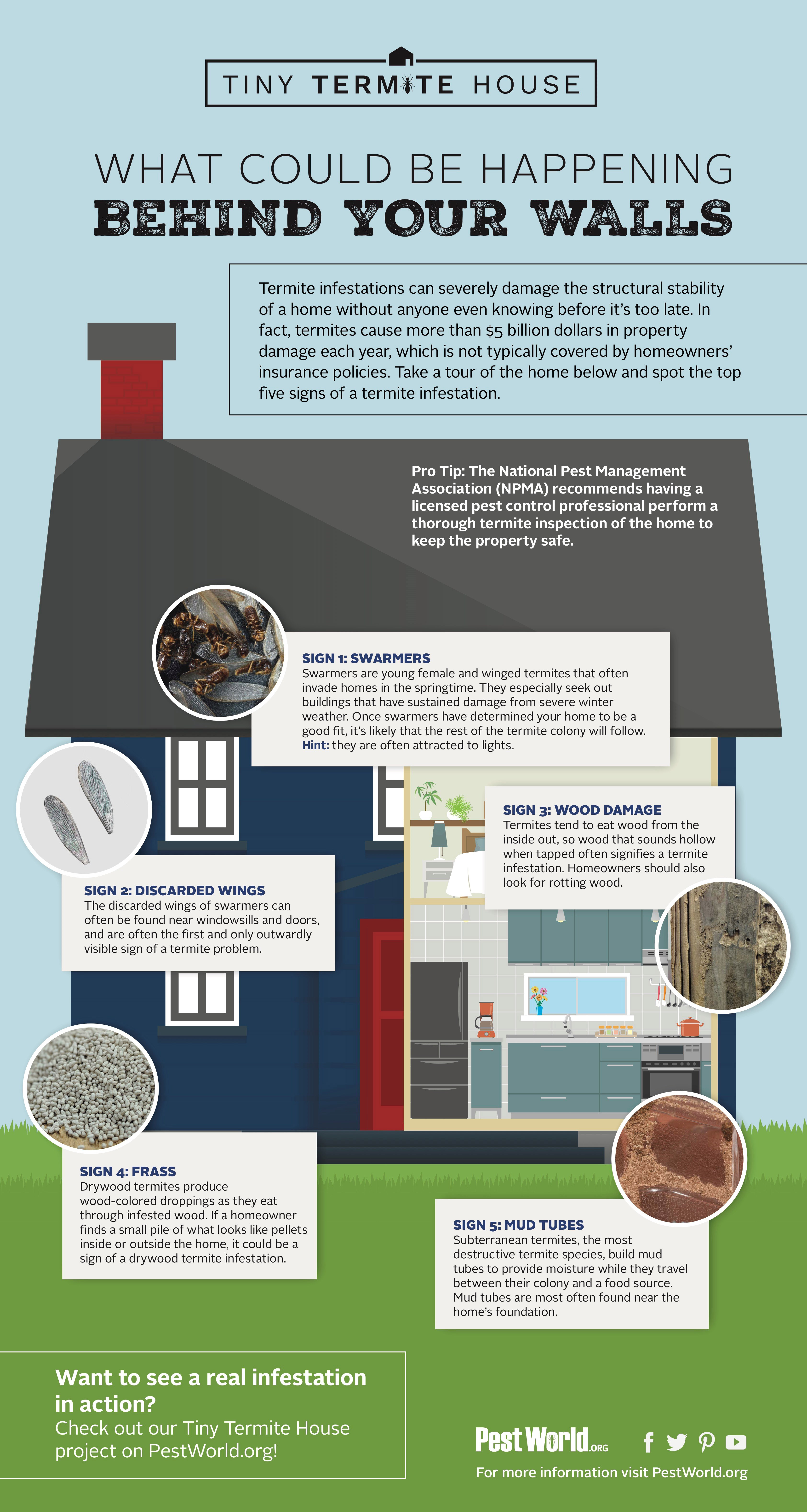 A1 Exterminators Termites in Home Infographic