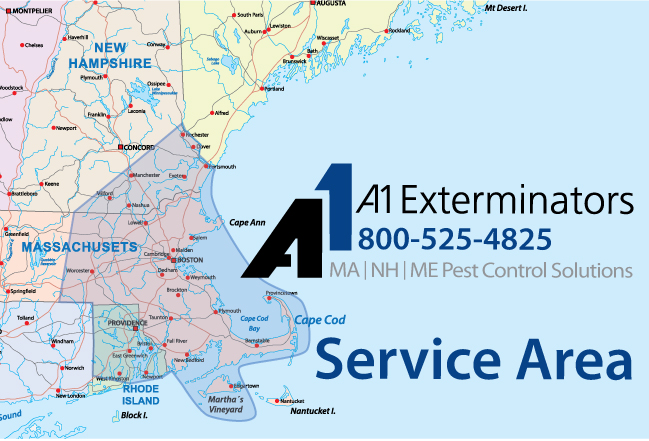 A1 Exterminators Service Area Throughout New England