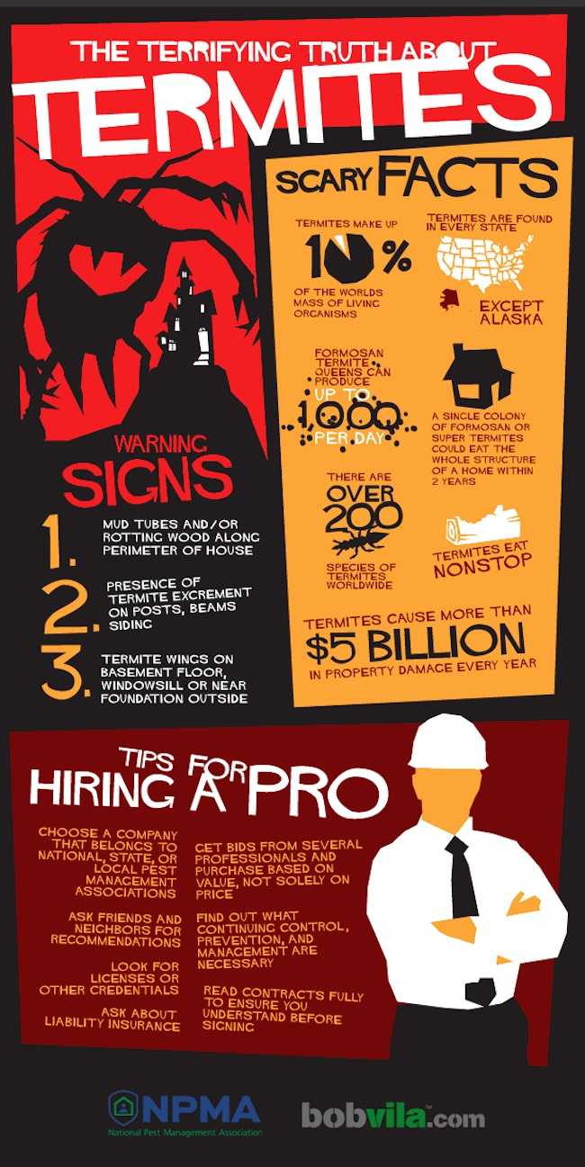Terrifying Truth about Termite Infographic