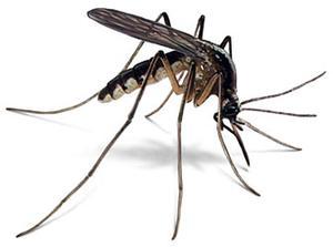 Misquito A1 Exterminators