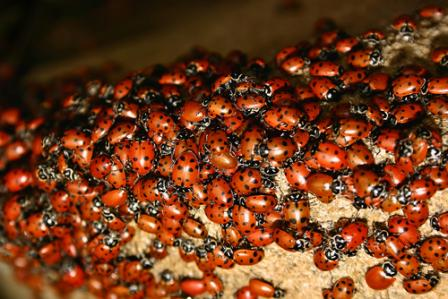get-ladybugs-out