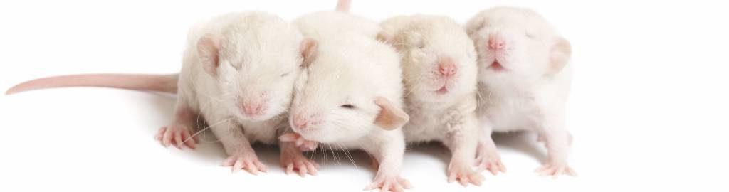 Mice Ad A1 Exterminators