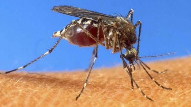 mosquito-ad